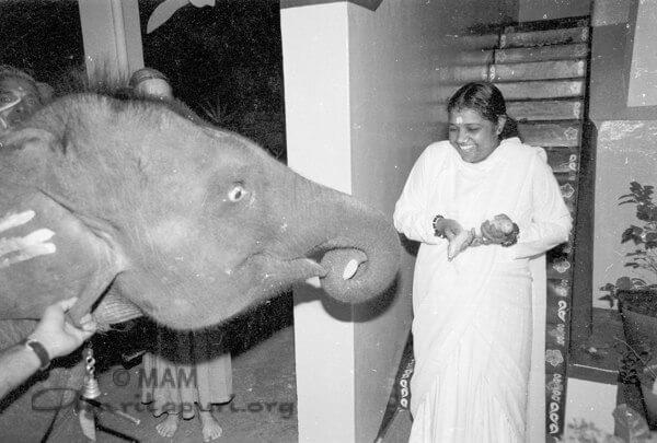 Amma with Rama, the elephant