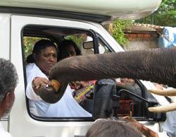 Amma feeding elephant Ram