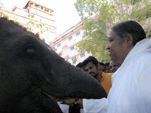 Amma with elephant Lakshmi