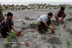 Tree planting along the shore of the Arabian sea