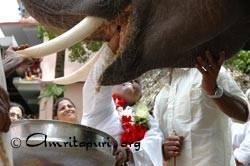 Amma feeding the elephants