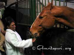 Amma feeding horse in Germany