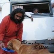Amma looking on as Swamiji feeds a dog