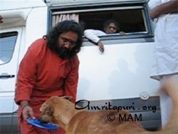 Amma looking on as Swamiji feeds a dog