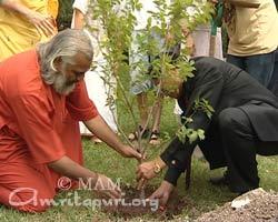 08planting-tree