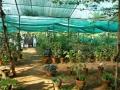 herbalgarden