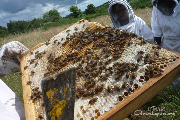 Bee farming by GreenFriends