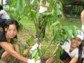 sg-tree1
