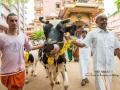 12-krishna-jayanthi21